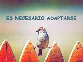 Adaptarse a los cambios con ayuda de la mediación